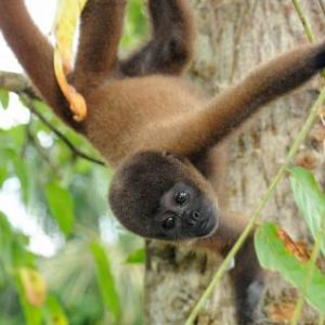South America Tour Highlights: The Amazon