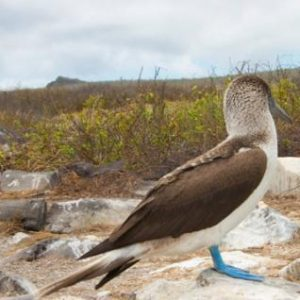 Experience The Dream Come True Adventure of Galapagos Land Based Tour