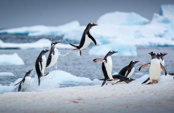 Santiago to Antarctica – Fly & Cruise