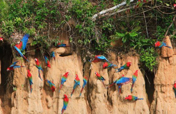Machu Picchu & Amazon