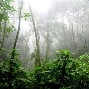 Top Tips for Seniors Touring the Amazon