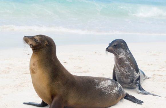 Galapagos Islands – San Cristobal & Española