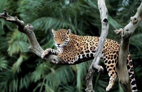 Fascinating Brazil: Rio de Janeiro & Pantanal North